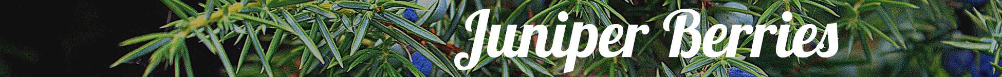 Gin Botanicals Juniper Berries