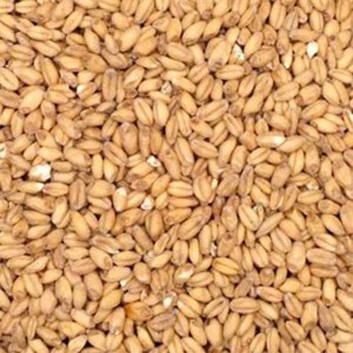 Gin Mash Ingredient Wheat